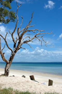 Blue lagoon - Fraser Island