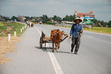 Vietnamese man with ox-driven cart