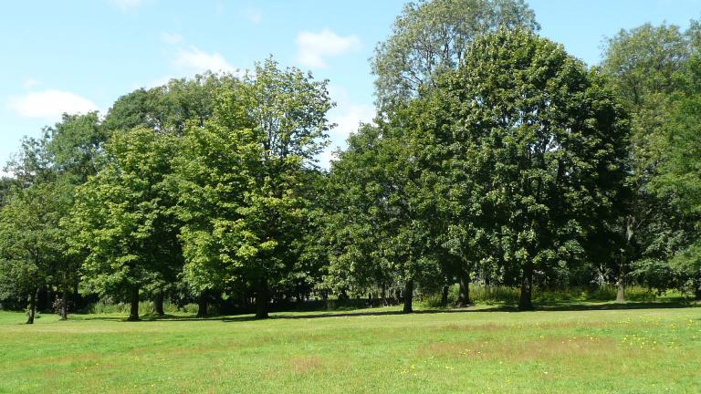 [Image: trees-in-park.jpg]