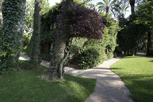 Section of the garden at Huerto del Cura